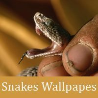 50 Hight Quality Snakes Wallpapes