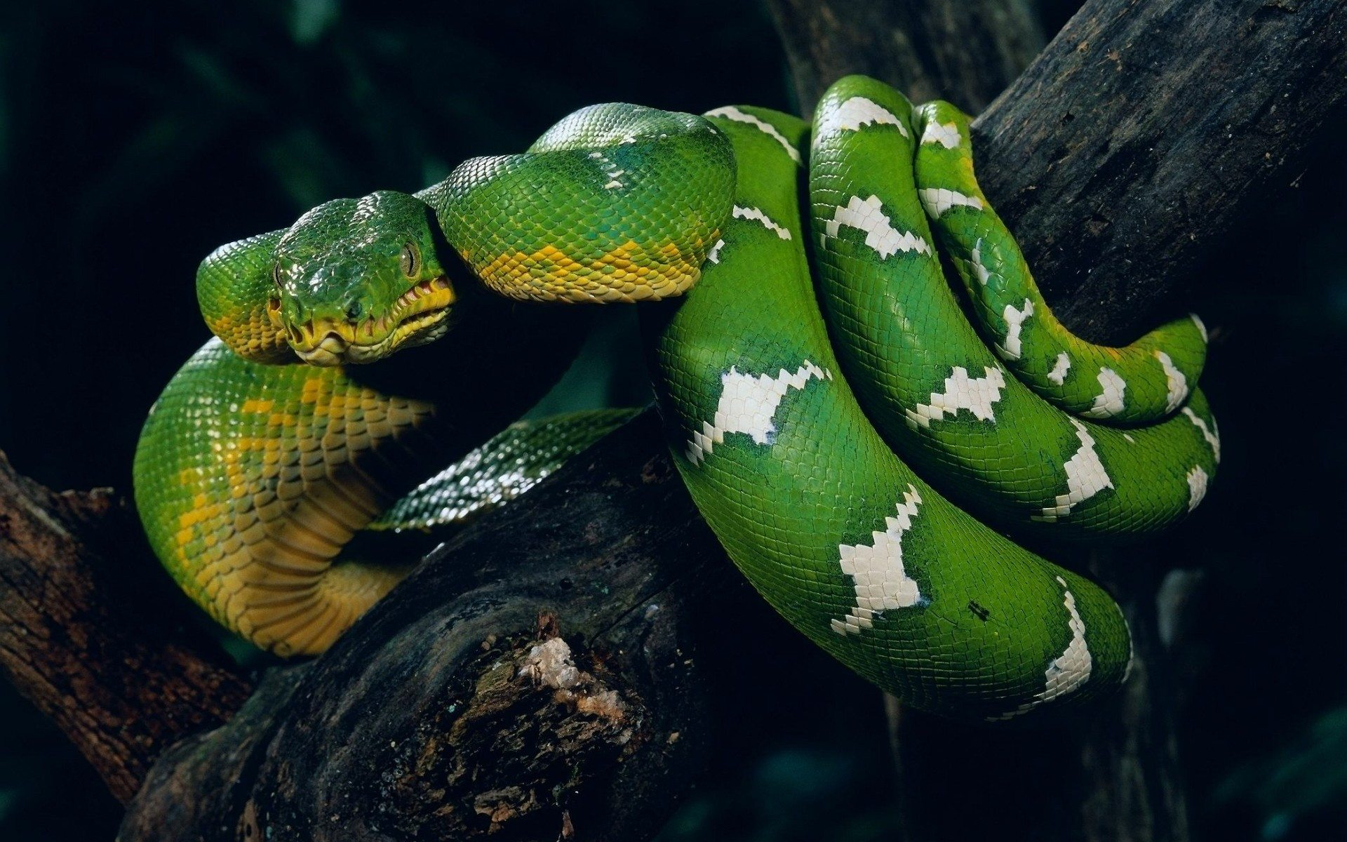Snakes_30