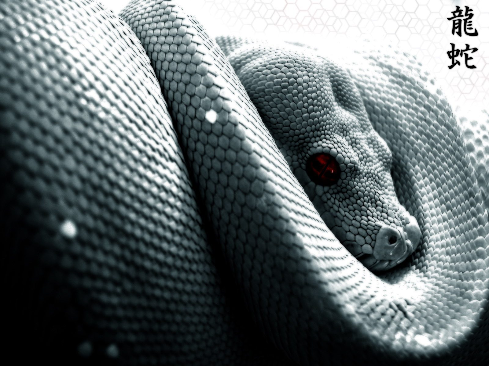 Snakes_44
