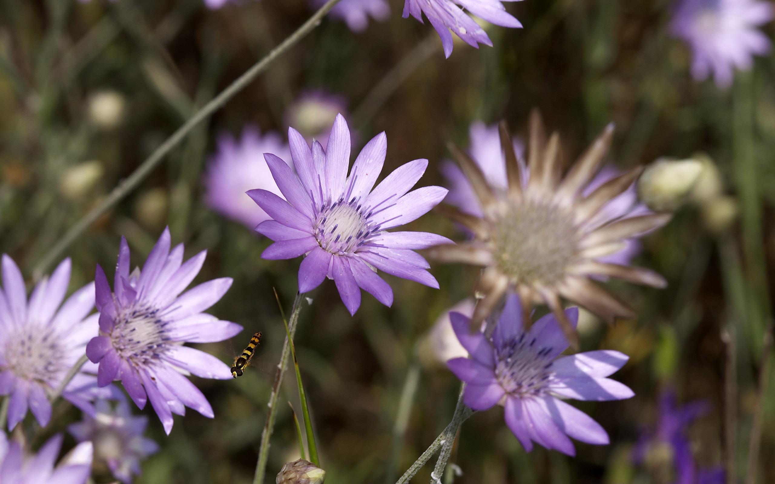 flowers_25