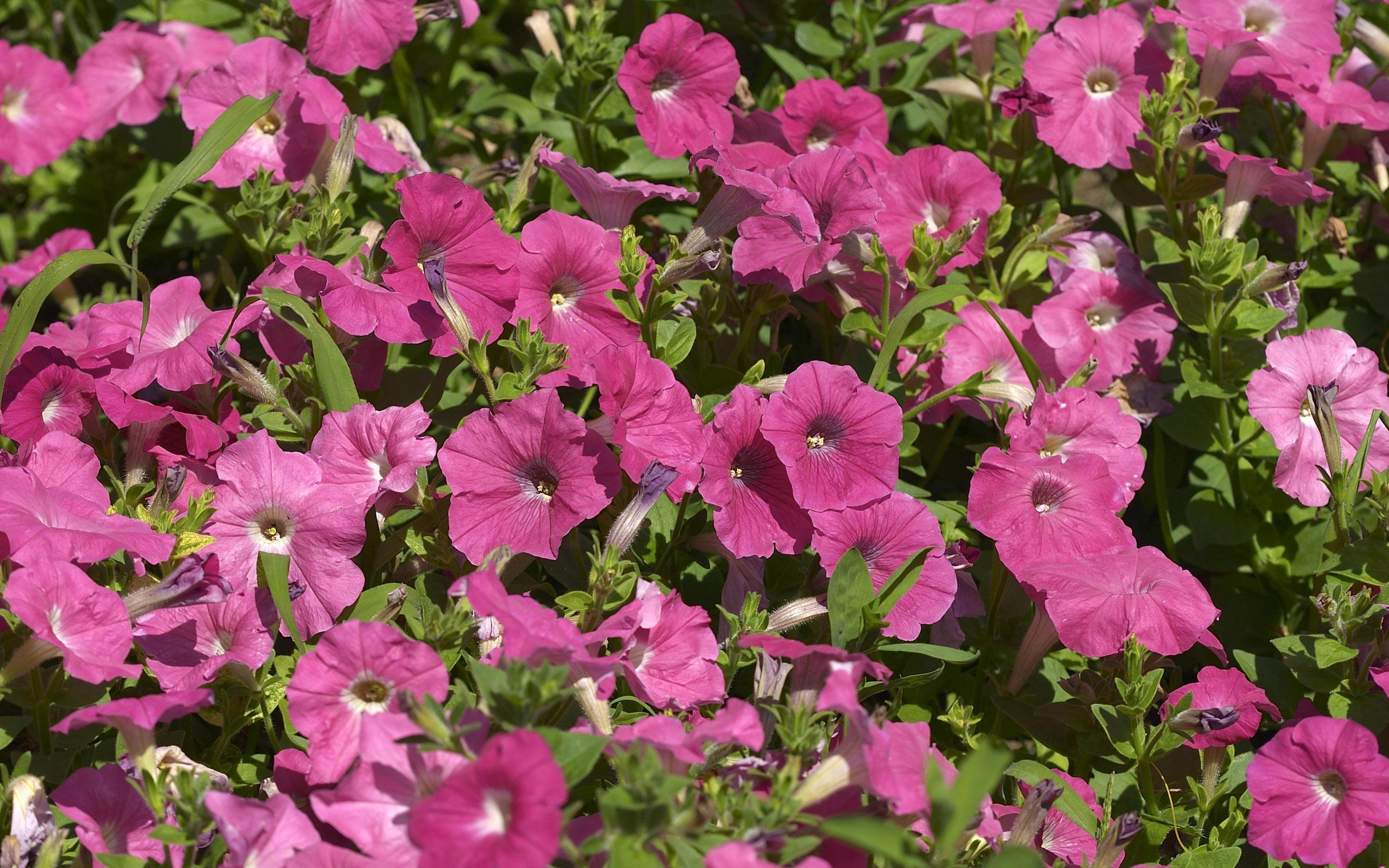 flowers_29