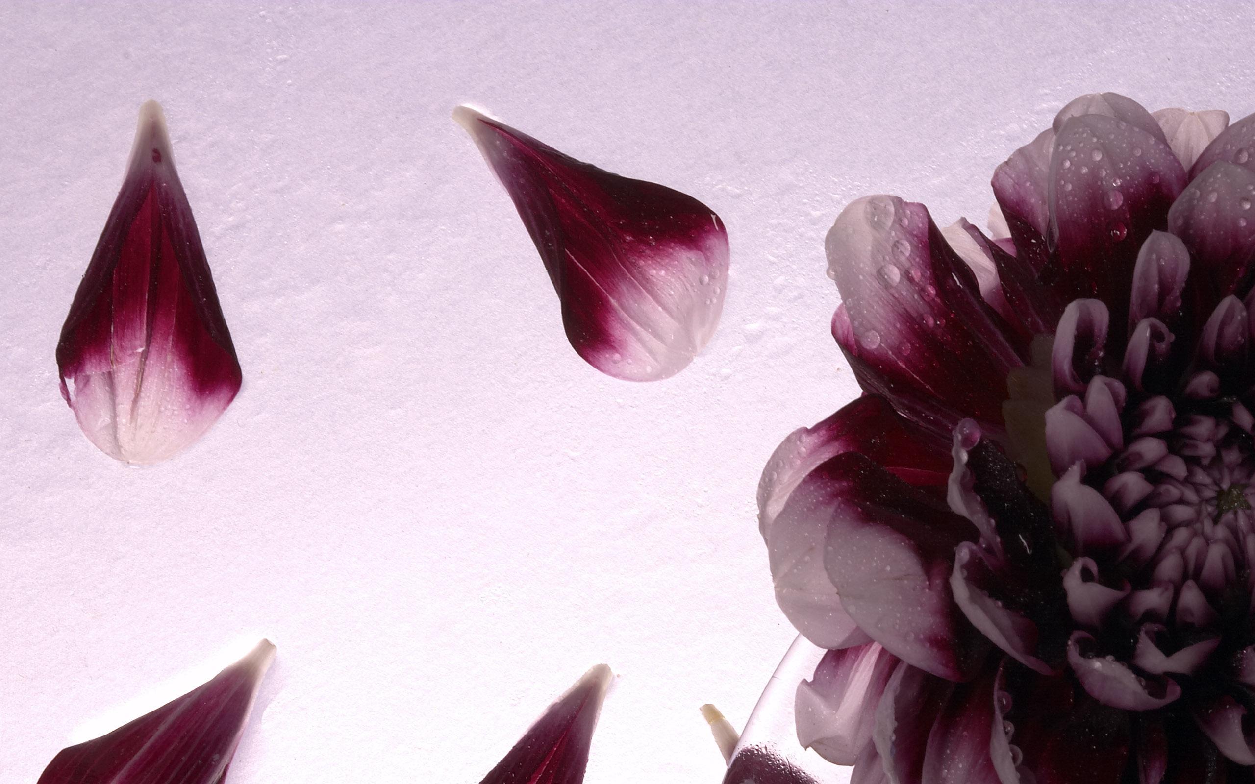 flowers_30