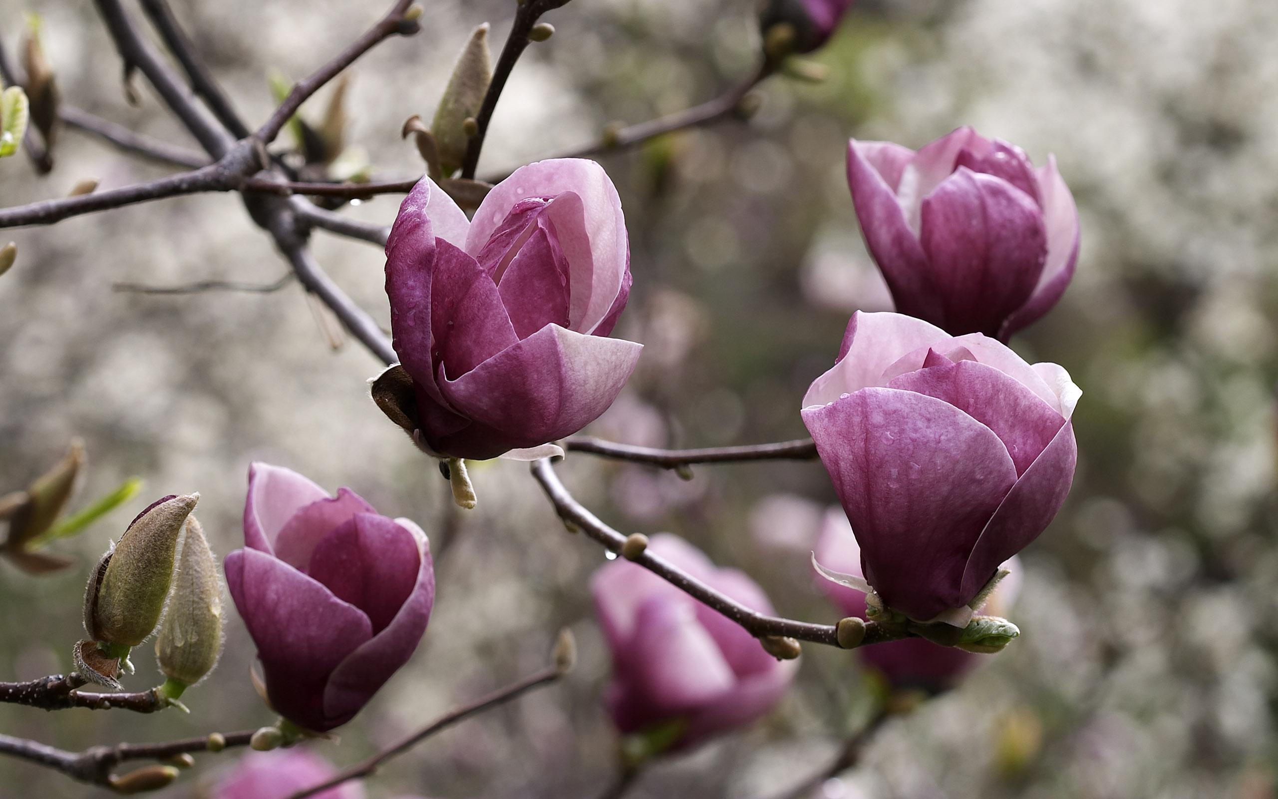 flowers_31