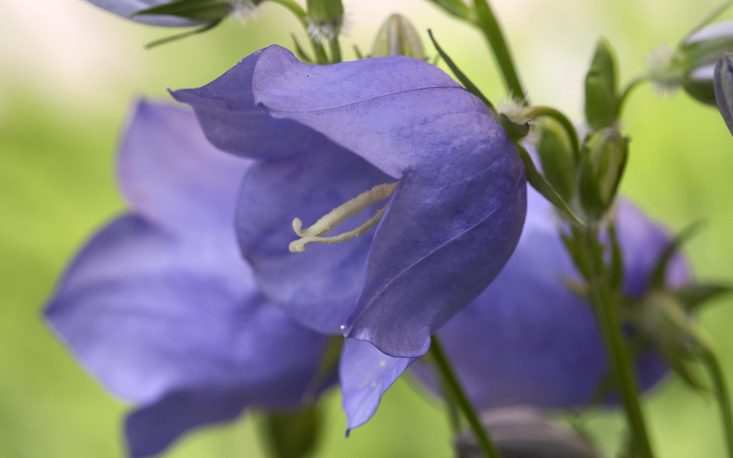 flowers_33