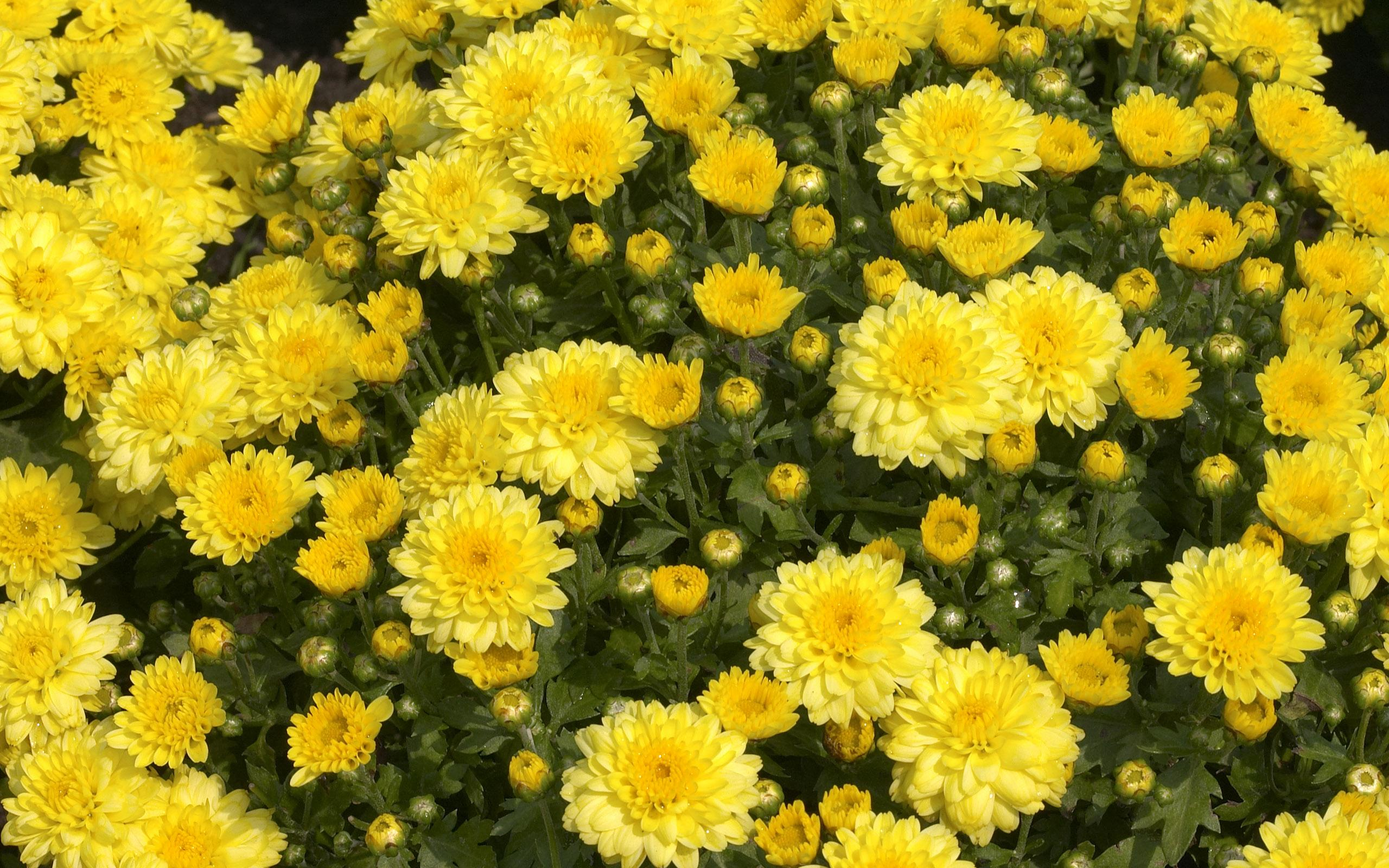 flowers_35