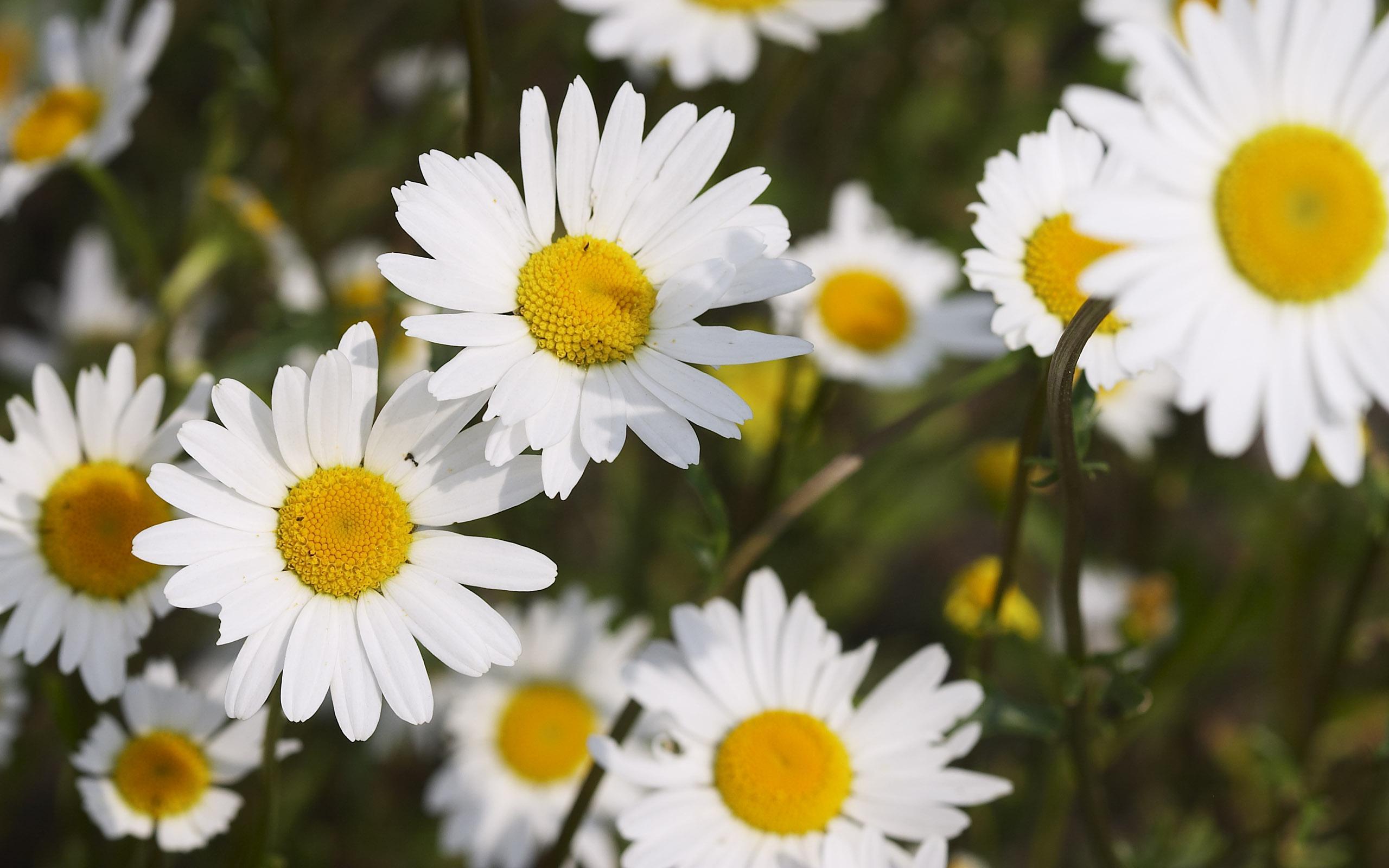 flowers_36