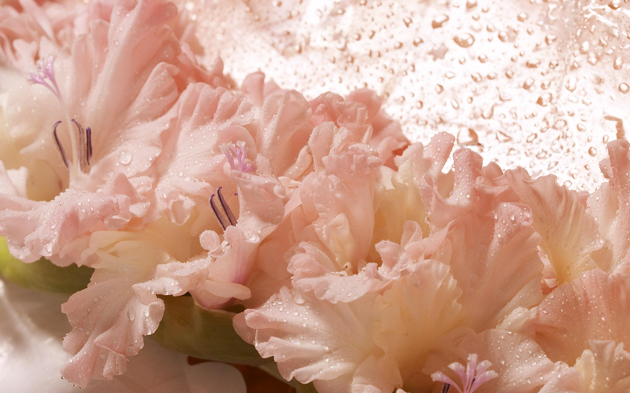 flowers_37