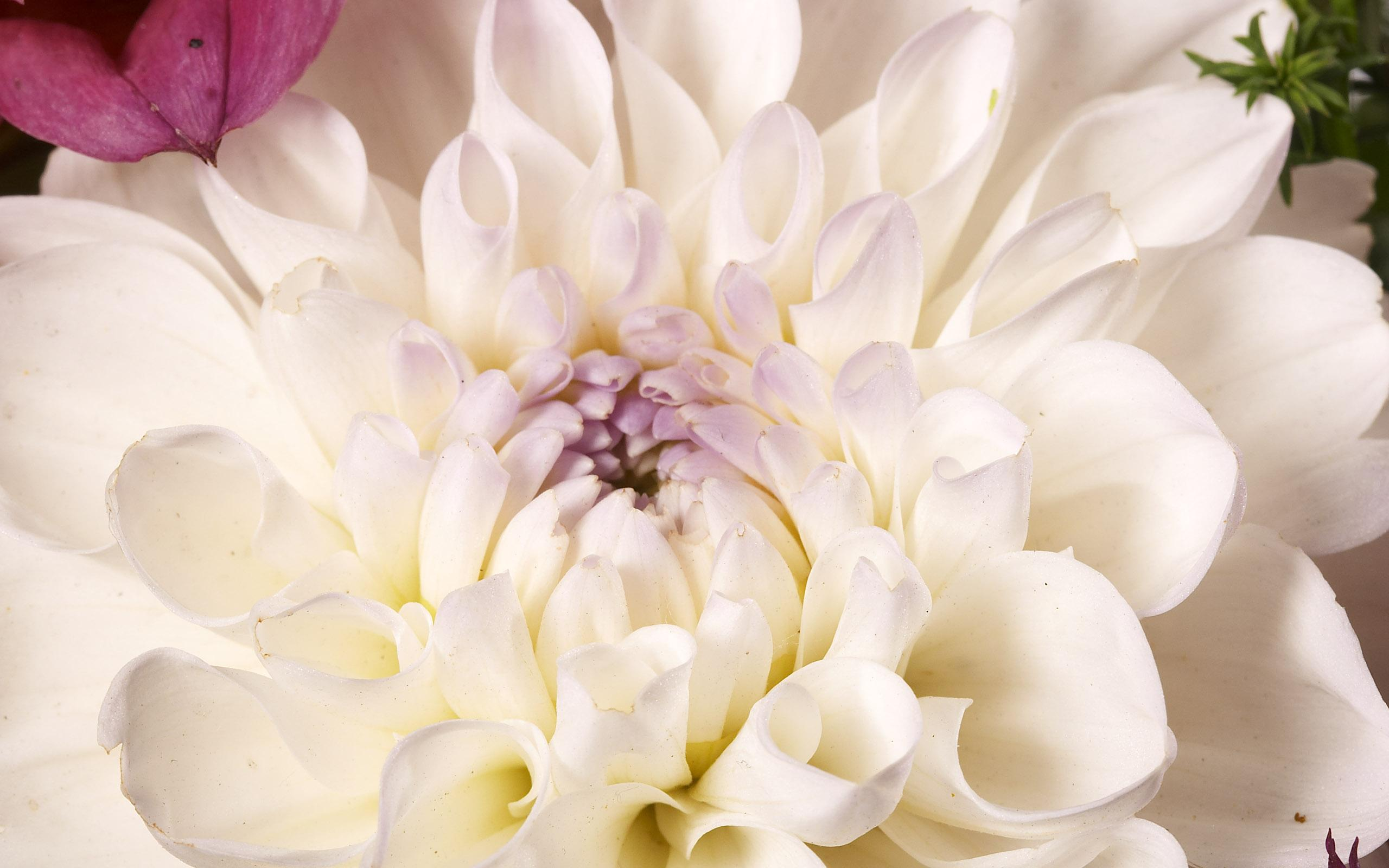 flowers_38