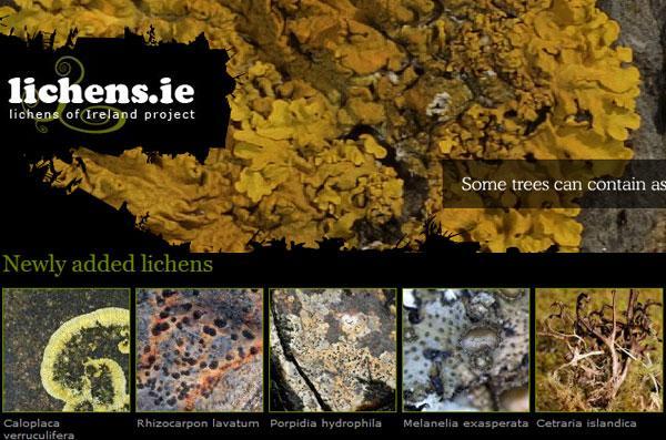 lichens-ie