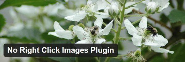 WordPress-Plugin-No-Right-Click-Images